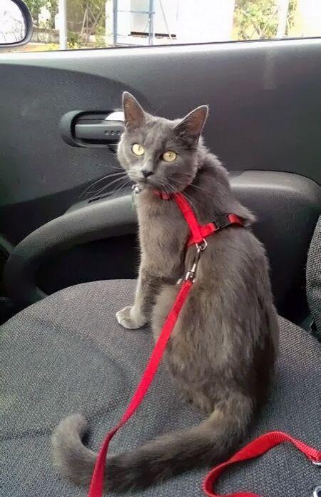 Cutie transport pisici