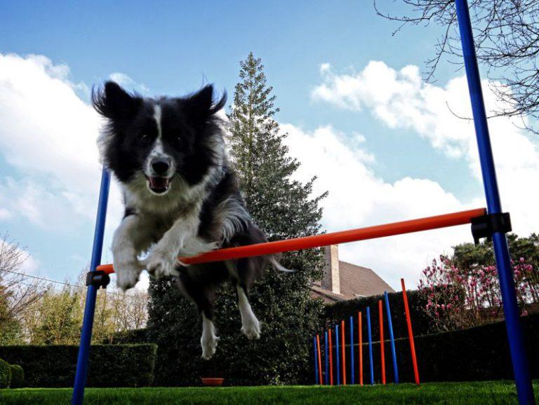 Dog Agility pentru tine și câinele tău