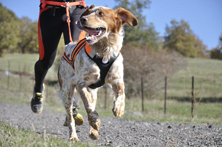 Sporturi canine - Canicross