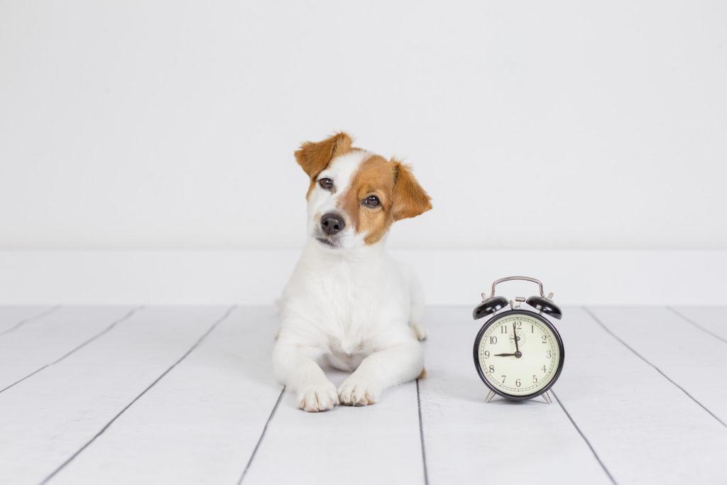 Dresarea câinelui să rămână singur acasă