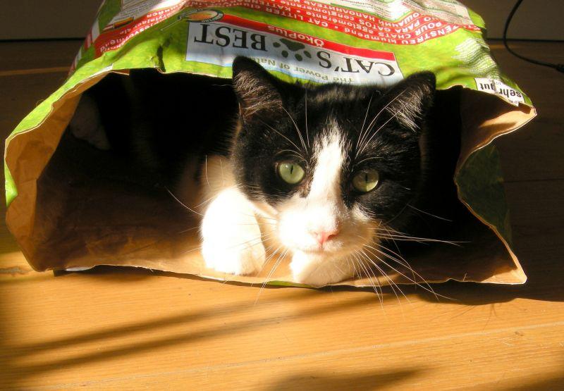 nisip cat's best