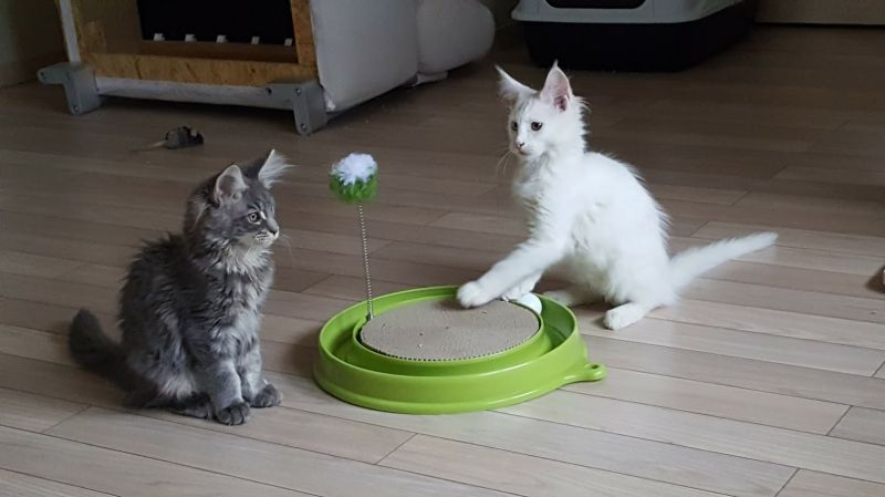 Jucarii interactive pentru pisici