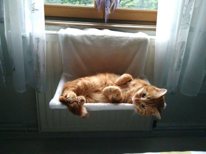 Culcuș pisică calorifer