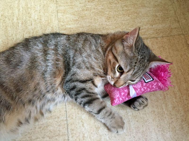 Jucărie pentru pisici