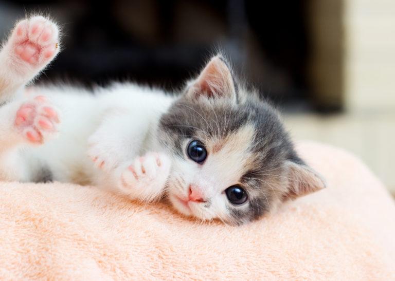 Obișnuirea pisicilor în casa nouă