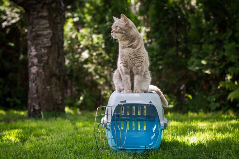 cum sa alegi cusca de transport pentru pisica