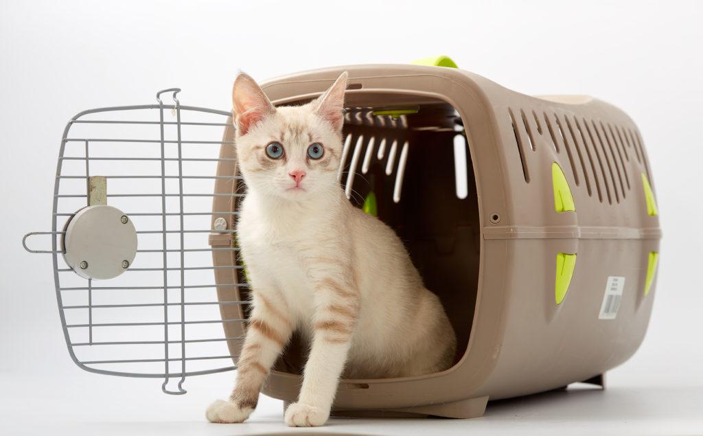 sfaturi pentru alegerea custii de transport pentru pisica
