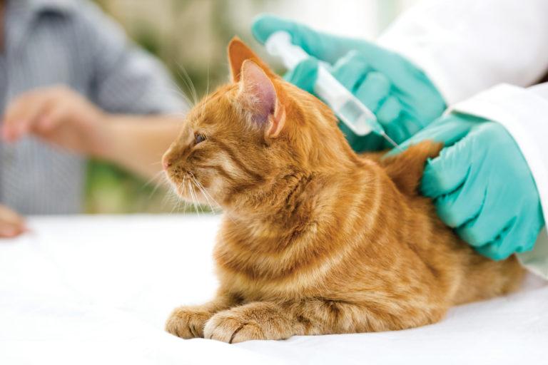 vaccinare pui pisica