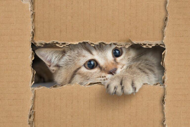 jucarii pentru pisici facute acasa