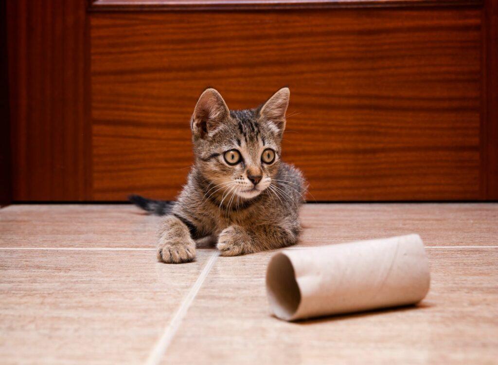 jucarie din rola de hartie igienica pentru pisica