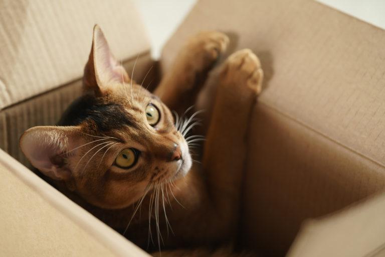 Pisica speriata in casa noua