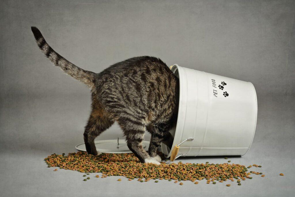 Ce pot face daca am o pisica grasa