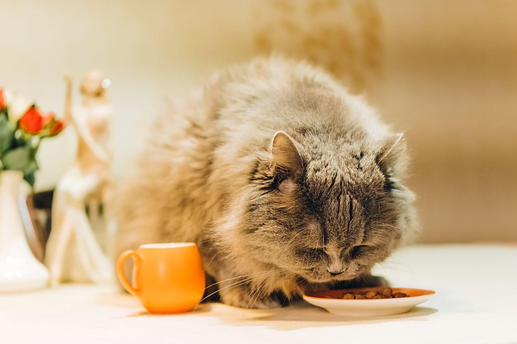 cauze de pierdere în greutate kitten