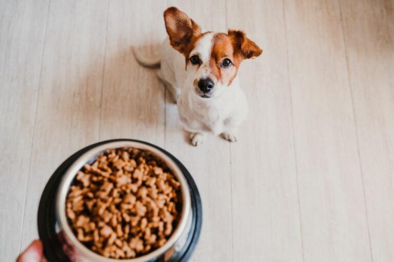 Cum sa calculezi cantitatea de hrana necesara pentru caini