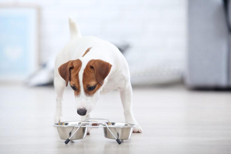 Schimbarea dietei câinelui