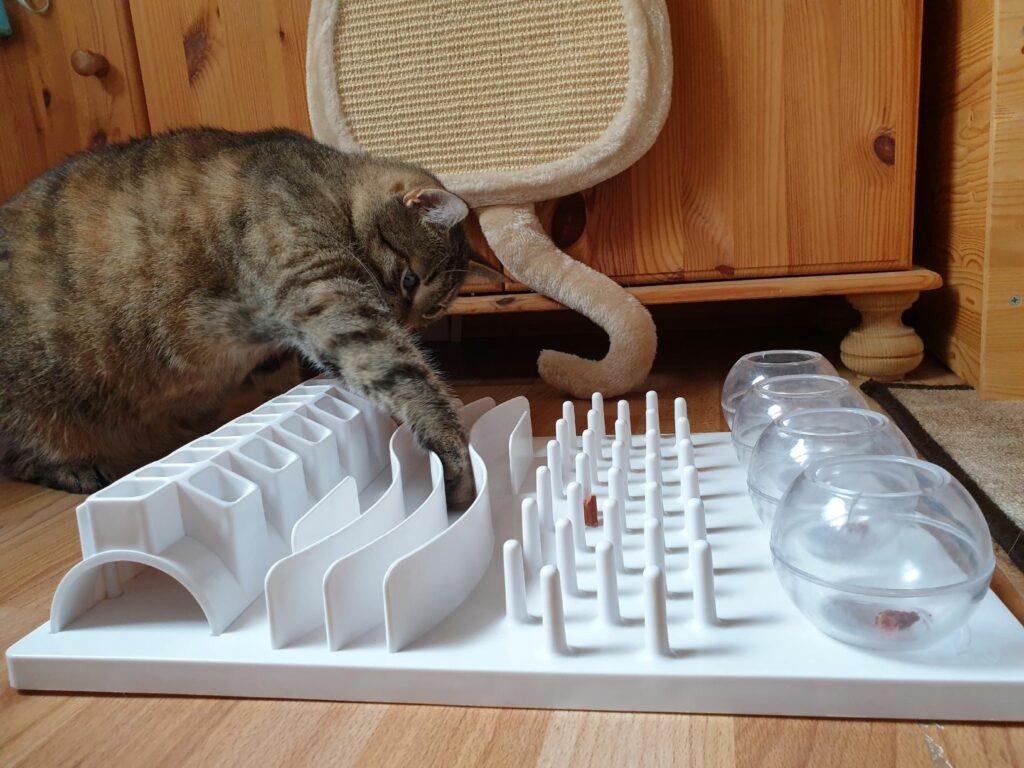 Sport pentru pisici cu jucarii interactive