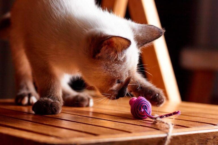 Sport pentru pisici cu jucarii