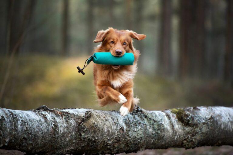 Puteti practica fitness pentru caini in aer liber