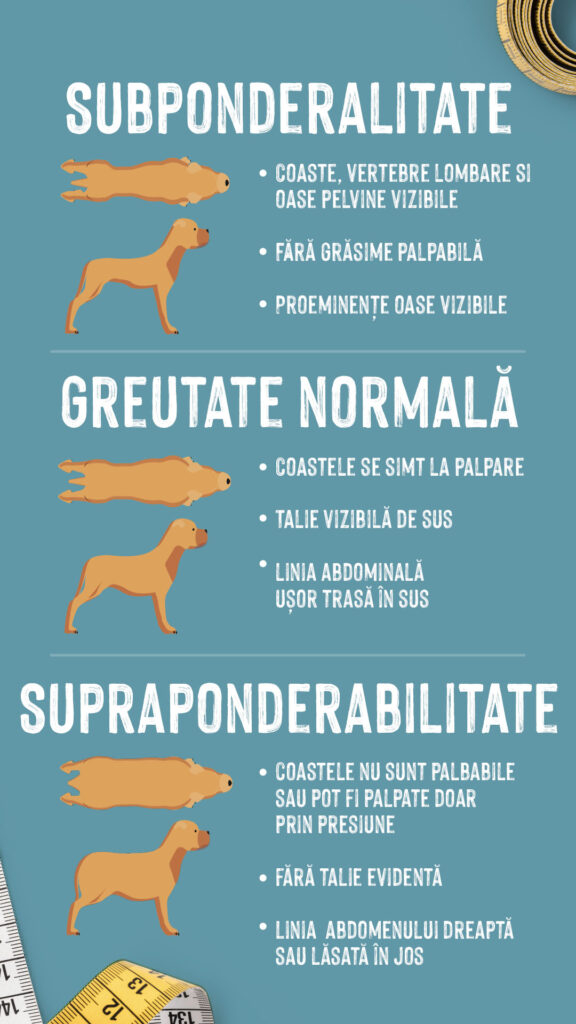 Graficul te ajută să înțelegi dacă ai un câine gras