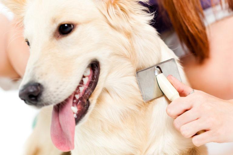 Îngrijirea blănii câinelui: sfaturi pentru toate tipurile de păr