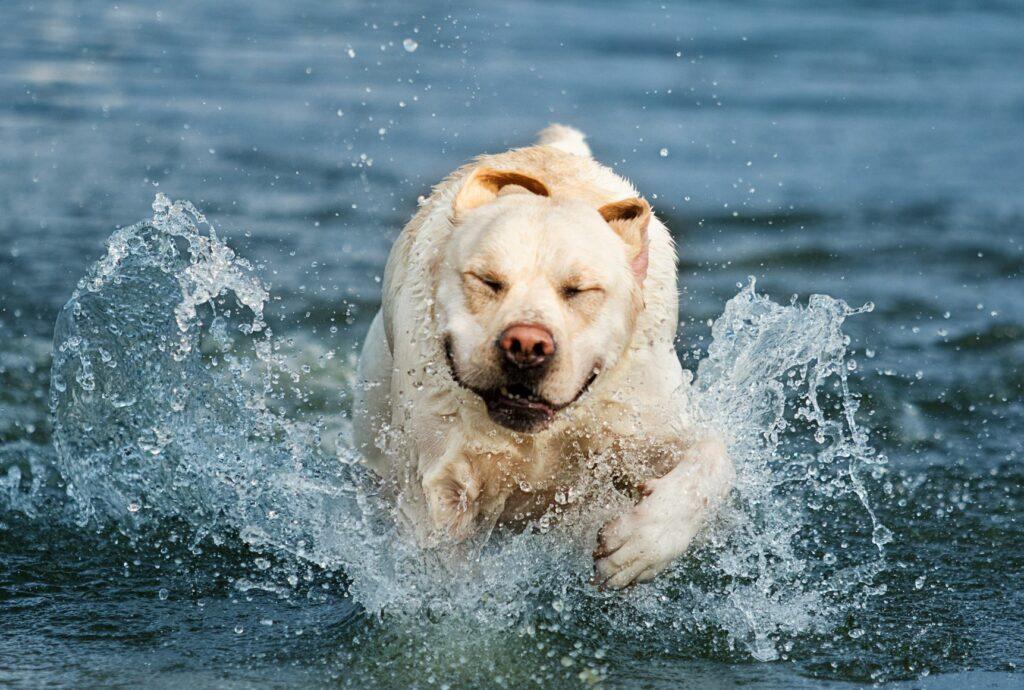 Miscarea in apa este benefica pentru un caine gras
