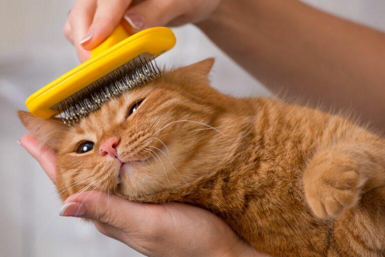 ingrijire parul de pisica