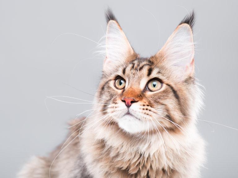 Cum se calculeaza varsta pisicii in ani omenesti