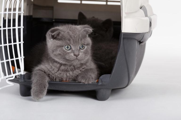 Pisica in avion in cusca