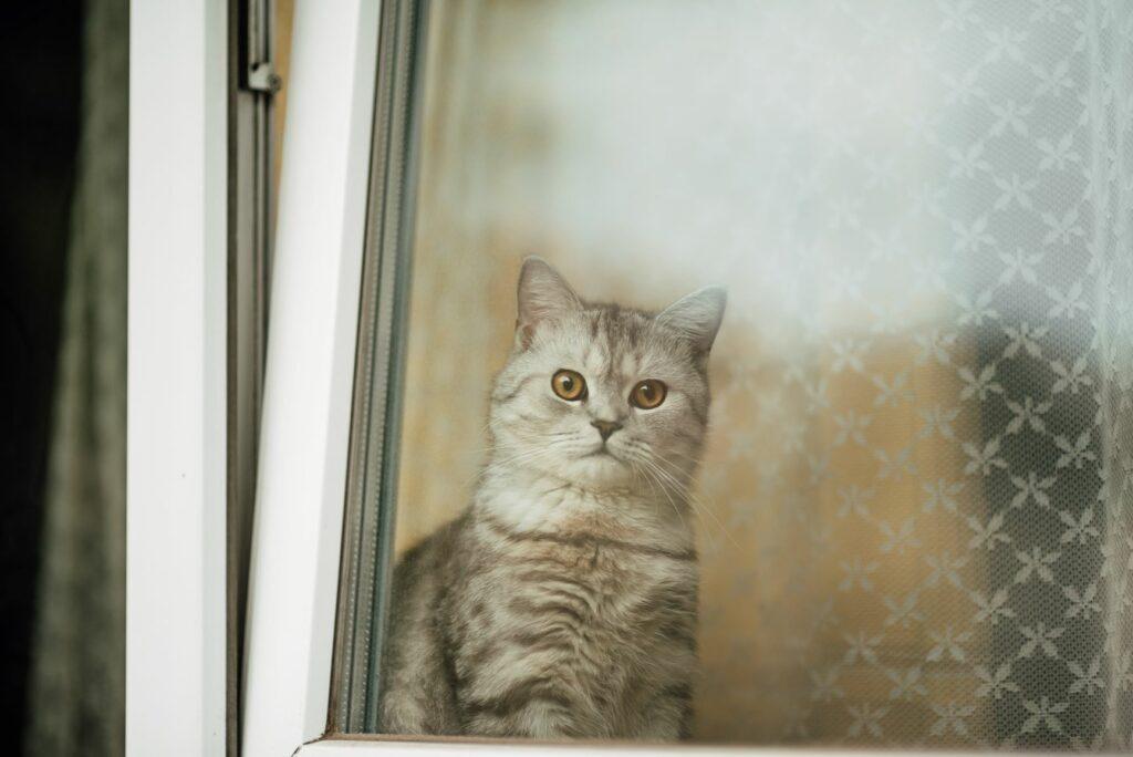 Pisica in geam cu grilaj pentru protectie geamuri rabatabile
