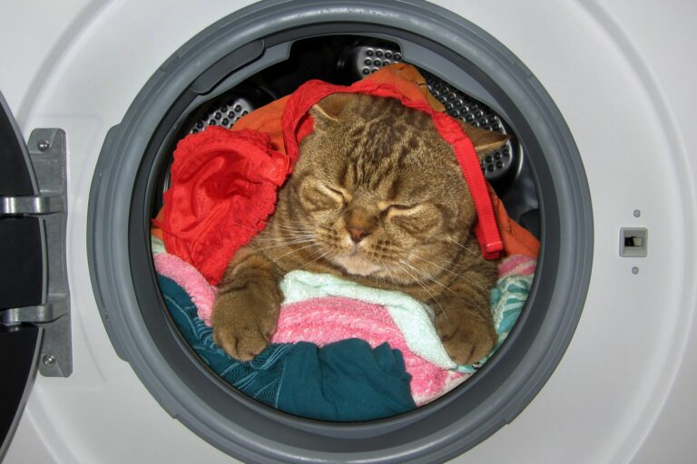 Pisica in masina de spalat - Cum să faci din locuința ta un loc sigur pentru pisică
