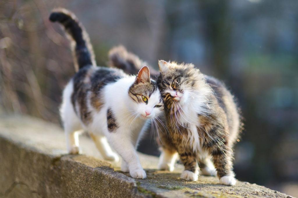 Doua pisici in exterior