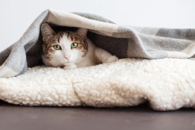 Răceala la pisici - simptome și tratament