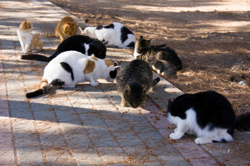 Grup de pisici fara stapan